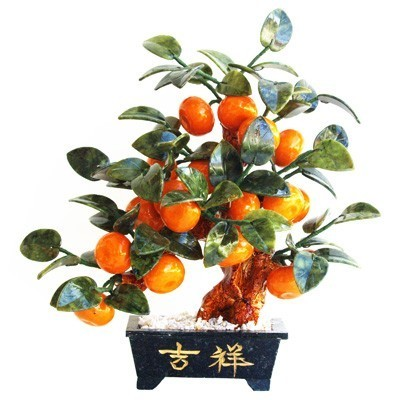 Jade Lime Tree with 18 Lime Fruits